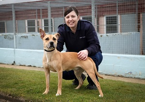 Animal warden - with dog 2