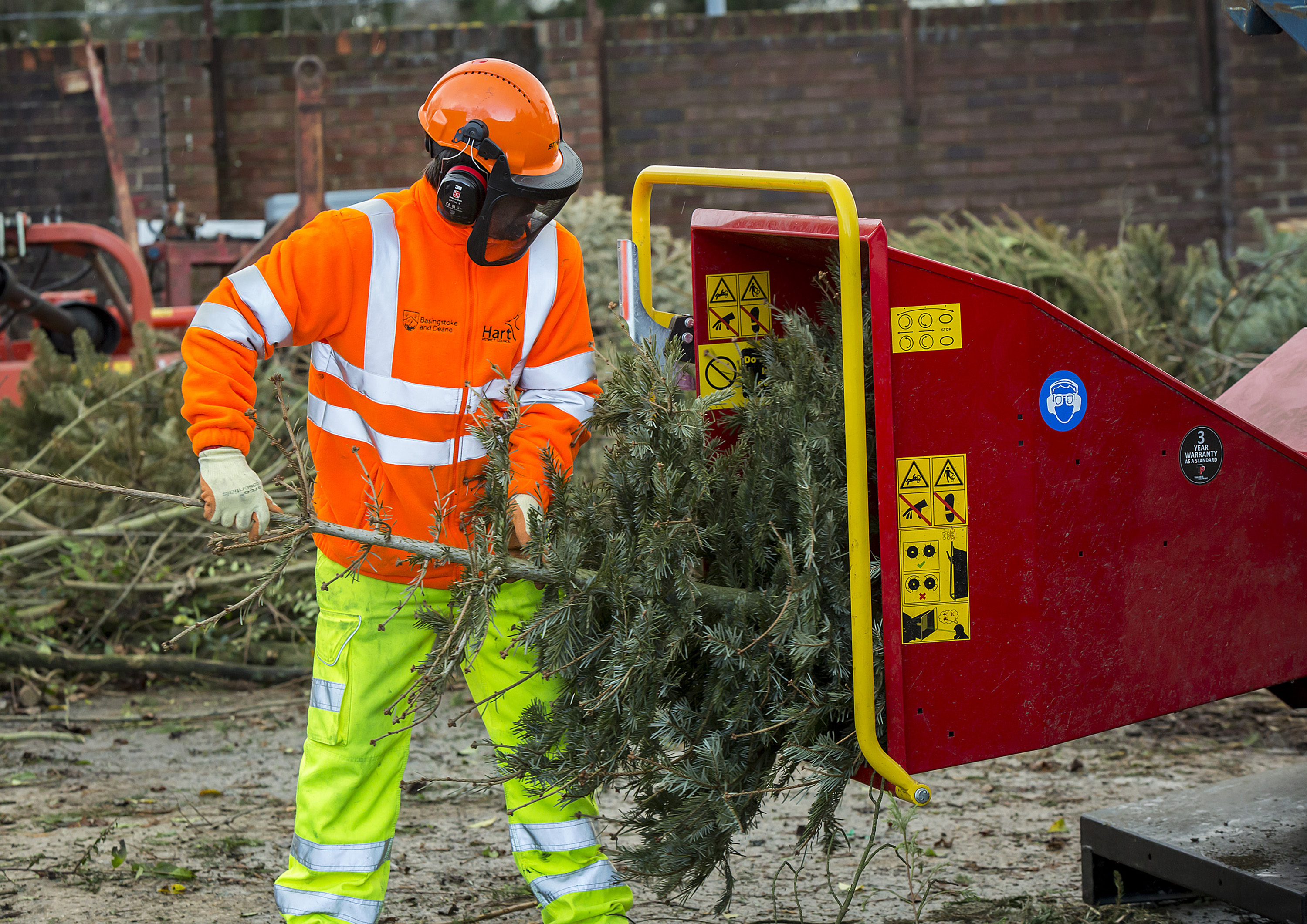 Christmas tree recycling (1)